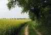 Une ballade près d'un champ vers le bois des hauteurs de Chartres