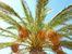 Palmiers...