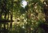 Dans la marais poitevin, la venise verte....