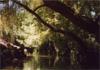 Une conche sous les arbres