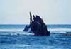 A l'île Maurice, au bord de la barrière de corail, une épave...