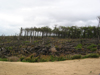 Foret du la réserve naturelle, au bord des dunes